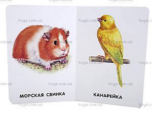 22 картинки «Домашние животные», А231016Р, купить