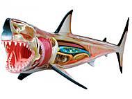 Анатомическая модель «Большая белая акула», 26111, купить