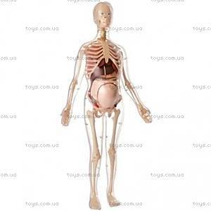 Анатомическая модель «Будущая мать», 51 деталь, MK064