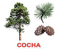 Большие карточки «Деревья» Вундеркинд, 096341097034, фото