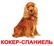 Большие карточки русско-украинские «Породы собак», 096303095764, фото