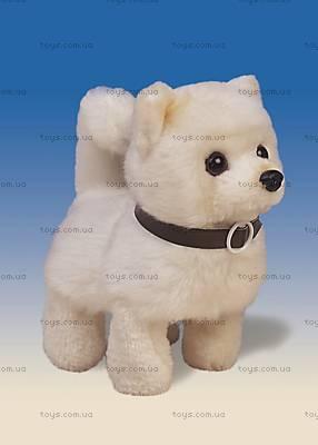 Интерактивная игрушка «Чихуахуа», 9307-7RB