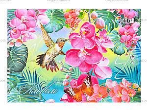 Альбом для рисования «Колибри», 40 листов, Ц260022У, фото