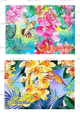 Альбом для рисования «Колибри», 40 листов, Ц260022У