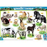 Цветной плакат с домашними животными, 86120, фото