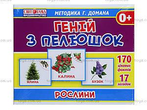Демонстрационные карточки «Гений с пеленок. Растения», 13107042У, фото