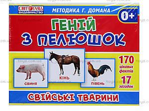 Демонстрационные карточки «Гений с пеленок. Домашние животные», 1025-213107043У, купить