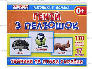 Демонстрационные карточки «Гений с пеленок. Животные и птицы Украины», 13107044У, купить