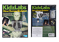 Набор обучающий «Скелет человека», 03375