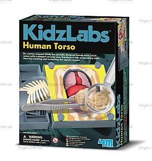 Детская лаборатория «Анатомия человеческого торса», 00-03373