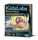 Детская лаборатория «Анатомия человеческого торса», 00-03373, отзывы