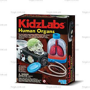Детская лаборатория «Человеческие органы», 00-03374