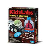 Детская лаборатория «Человеческие органы», 00-03374, отзывы