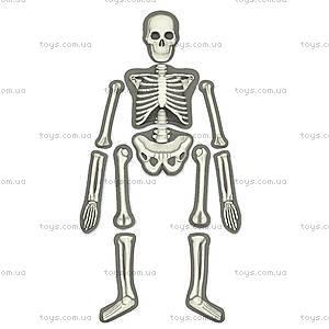Детская лаборатория «Скелет человека», 00-03375, фото