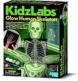 Детская лаборатория «Скелет человека», 00-03375, отзывы