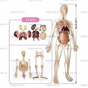 Анатомическая модель скелета «Мужчина», 45 деталей, МК002, купить