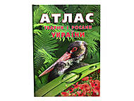 Энциклопедия для детей «Атлас животных и растений Украины», Талант