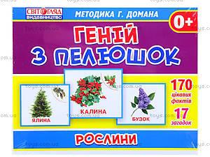 Демонстрационные карточки «Растения», 1014-213107042У, фото