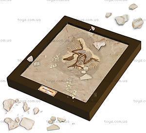 Лаборатория юного палеонтолога «Археоптерикс», CL143K, цена