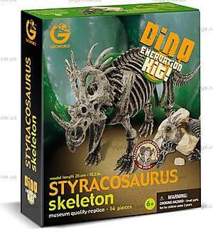 Раскопки динозавров «Скелет Стиракозавра», CL172K