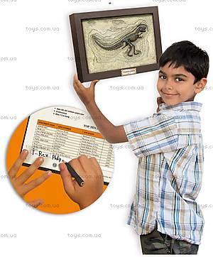 Игровой набор юного палеонтолога «Тиранозавр Рекс», CL145K, фото