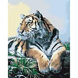 Гордый тигр на картине по номерам, KH2460, купить