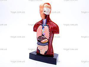Игровой докторский набор «Анатомия», 2531, купить