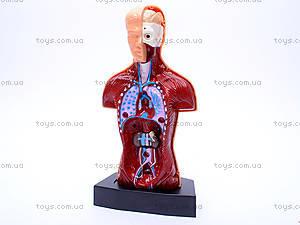 Игровой докторский набор «Анатомия», 2531, фото