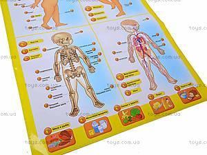 Интерактивный плакат «Анатомия», 13129, игрушки