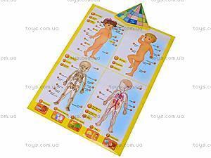 Интерактивный плакат «Анатомия», 13129