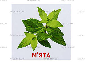 Мини-карточки «Растения нашей планеты», 1014-1, купить