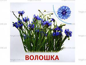 Мини-карточки «Растения нашей планеты», 1014-1, фото