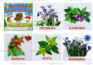 Мини-карточки «Растения нашей планеты», 1014-1