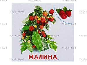 Мини-карточки «Растения нашей планеты», 1014-1, цена