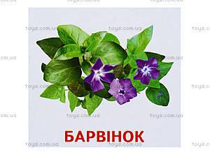 Мини-карточки «Растения нашей планеты», 1014-1, игрушки