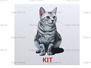 Мини-карточки «Домашние животные», 1025-1, купить