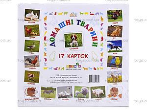 Карточки-мини «Домашние животные», КД022, купить
