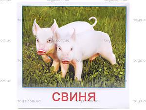 Карточки-мини «Домашние животные», КД022, фото
