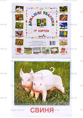Карточки-мини «Домашние животные», КД022