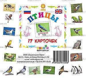Карточки мини «Птицы», 81662