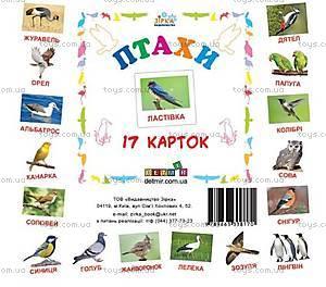 Карточки-мини «Птицы», 72753