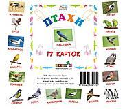 Карточки-мини «Птицы», 72753, детский