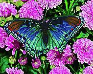 """Картина по номерам + Алмазная мозаика """"Бабочка в цветах"""" ★★★★, GZS1032, купить игрушку"""