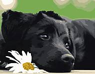 """Картина по номерам """"Чёрный щеночек"""" ★★★, VA-0518, купить"""