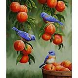 Картина по номерам «Дрозды и персики», КНО2429, фото