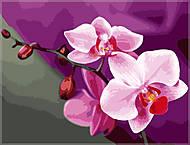 Картина по номерам «Розовые орхидеи», КН1081, отзывы