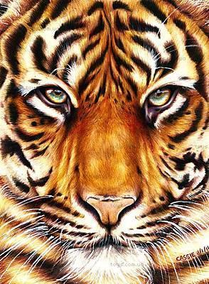 Картина по номерам «Сила тигра», КНО2459