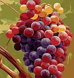 Картина по номерам «Виноград», MG1124, фото