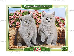 Пазл на 120 деталей MIDI «Серые котята», B-12565, фото