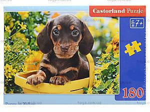 Пазл Castorland на 180 деталей «Щенок в корзине», В-018161, фото